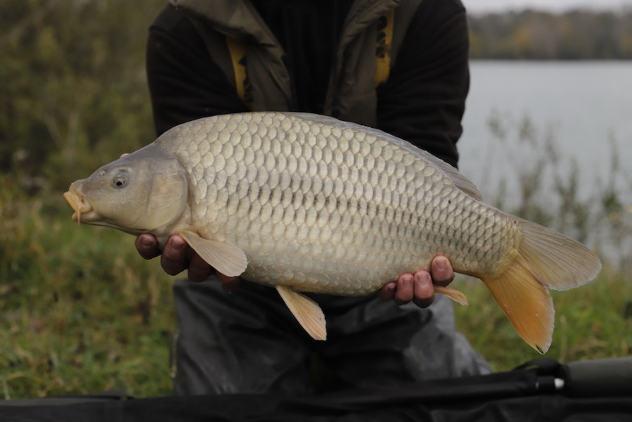Fish 56 - 7lb 8oz - October 2017