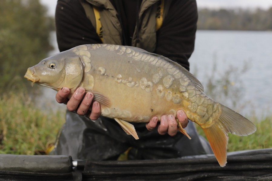 Fish 64 - 7lb - October 2017 - Pearly