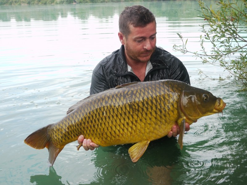 Albi with a mint common