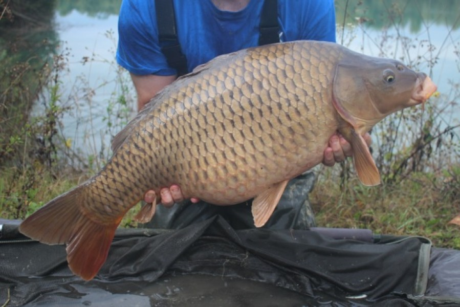 24lb Stock Pond common stocked into the main lake