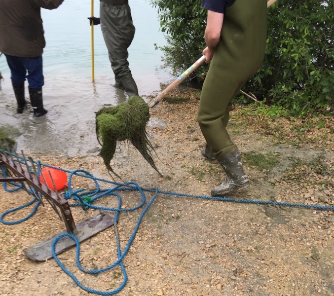 Removing the weed from the Stock pond